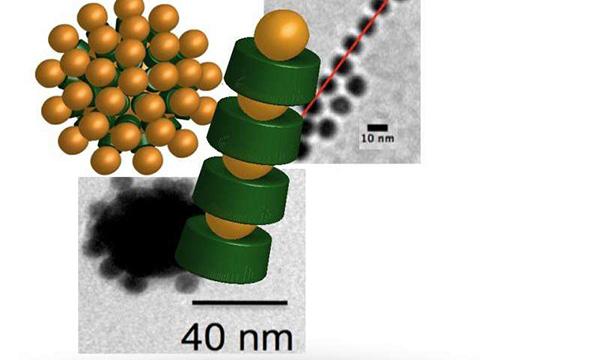 蛋白质(模型中为绿色)和金纳米粒子的特定结构组成