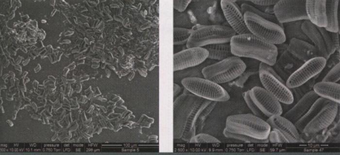 材料与测试:图:微观污损生物实例的电子显微镜图像