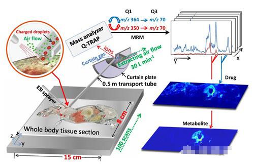 """分析的质谱分子成像新方法""""也在这个过程中应"""