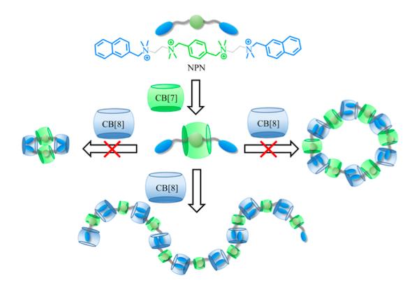 """(1)线形超分子聚合物又称主链型超分子聚合物,由非共价键作用连接双官能度的单体构成聚合物主链。 (2)支化超分子聚合物往往具有多个支化点,其支化位点可以通过非共价键作用构建,也可以通过共价合成构筑。其合成方法包括""""先核后臂""""和""""先壁后核"""", 通过改变加入聚合单体的比例,可以对星形超分子聚合物的分子量进行有效的调控。 (3)侧链型超分子聚合物的构筑通常是在共价聚合物链的侧基上通过非共价键作用引入多条侧链来实现的,也可称为接枝型超分子聚合物。值得注意的是,侧链超"""
