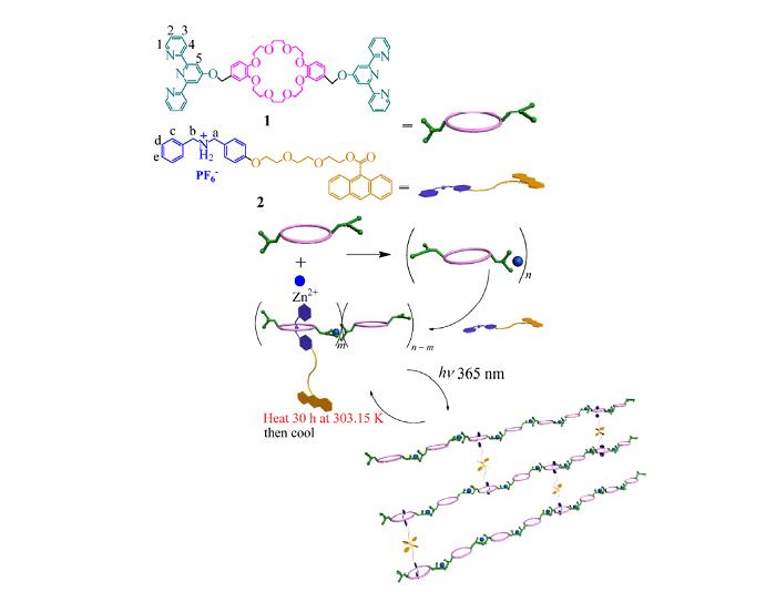 未来,超分子聚合物凝胶体系的发展不仅仅体现在具有新的结构和性能的