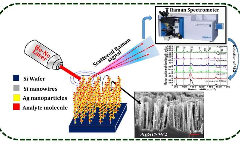 纳米粒子修饰的硅纳米线和表面增强拉曼散射技术可以检测低浓度的分子